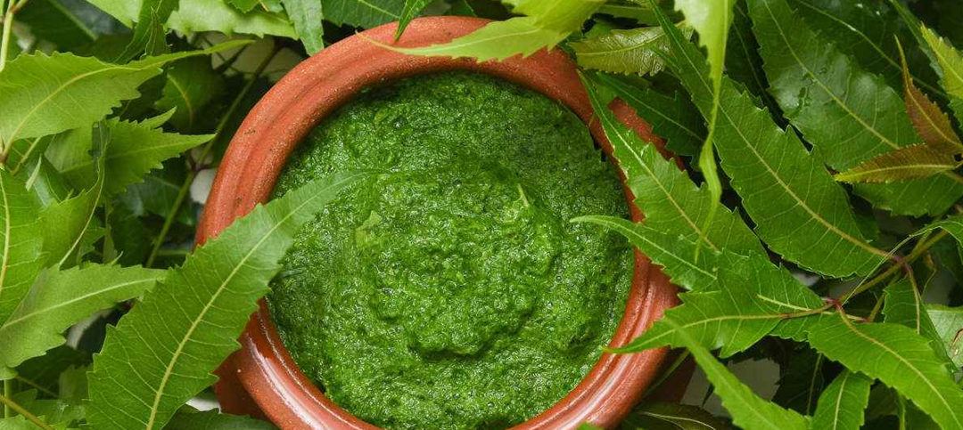 Benefits of Neem for Hair and Skin: How to Use this Miracle Herb